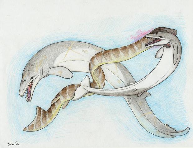 Điểm tên những loài bò sát khổng lồ từng xơi tái cả cá voi tiền sử - Ảnh 6.