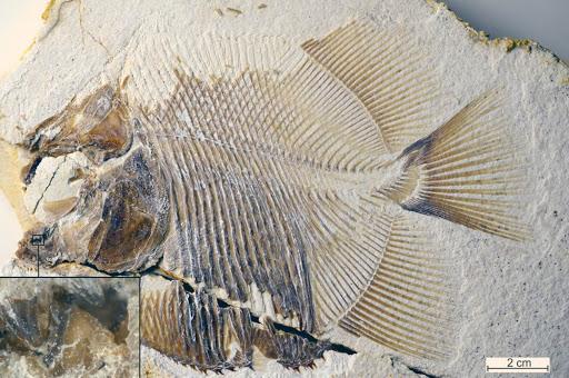 Những ví dụ cho thấy tiến hóa đôi khi cũng hà tiện, tận dụng cùng một đặc điểm cho hai loài khác nhau - Ảnh 6.