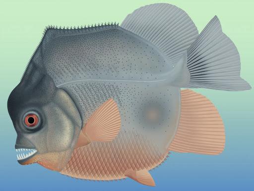Những ví dụ cho thấy tiến hóa đôi khi cũng hà tiện, tận dụng cùng một đặc điểm cho hai loài khác nhau - Ảnh 7.