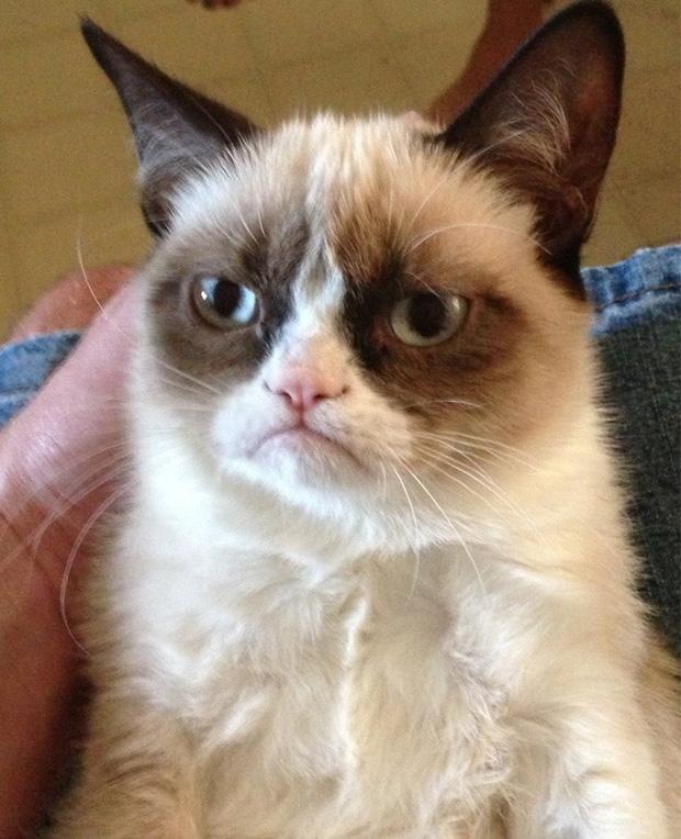 Điểm mặt những meme nổi tiếng thế giới mà ai cũng biết rõ - Ảnh 9.