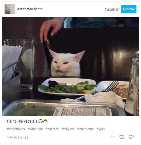 Meme cô gái chửi con mèo bắt nguồn từ đâu? - Ảnh 5.
