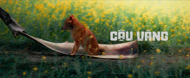 Cậu Vàng tung first look giới thiệu sinh vật lạ: Vẫn là chó Nhật nhưng lông đỏ, hàng siêu hiếm? - Ảnh 2.