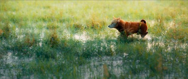 Cậu Vàng tung first look giới thiệu sinh vật lạ: Vẫn là chó Nhật nhưng lông đỏ, hàng siêu hiếm? - Ảnh 5.
