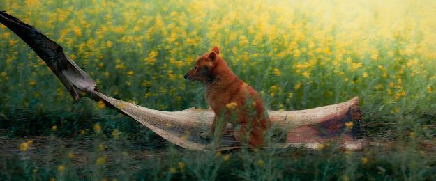 Cậu Vàng hé lộ những hình ảnh đầu tiên đậm chất miền quê Bắc Bộ - Ảnh 4.