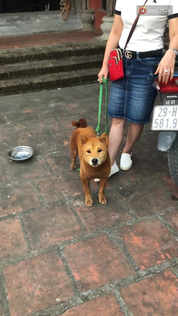 Cậu Vàng tung first look giới thiệu sinh vật lạ: Vẫn là chó Nhật nhưng lông đỏ, hàng siêu hiếm? - Ảnh 7.