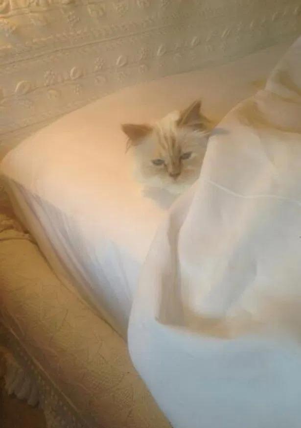 Được thừa kế 4635,5 tỷ đồng từ chủ, con mèo tỷ phú tận hưởng cuộc sống sang chảnh nhất thế giới - Ảnh 5.