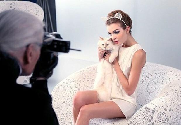 Được thừa kế 4635,5 tỷ đồng từ chủ, con mèo tỷ phú tận hưởng cuộc sống sang chảnh nhất thế giới - Ảnh 12.