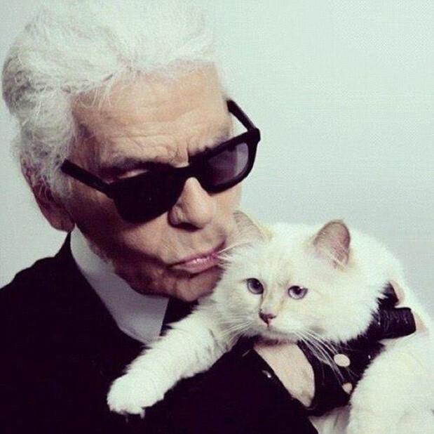 Được thừa kế 4635,5 tỷ đồng từ chủ, con mèo tỷ phú tận hưởng cuộc sống sang chảnh nhất thế giới - Ảnh 8.