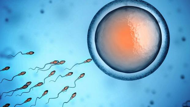 7 sự thật khó đỡ mà bạn chưa biết về tinh trùng - Ảnh 1.