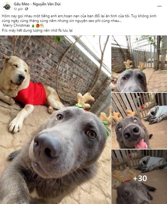 Nguyễn Văn Dúi từng là chú chó nổi tiếng được cả CĐM quốc tế quan tâm Photo-1-16088875399981537455178