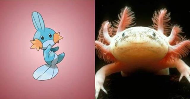 Nguyên mẫu đời thực của các Pokémon đình đám - Ảnh 7.