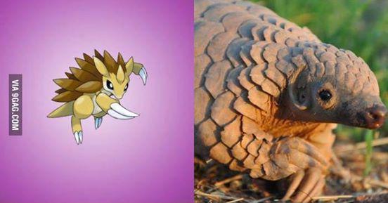 Nguyên mẫu đời thực của các Pokémon đình đám - Ảnh 3.