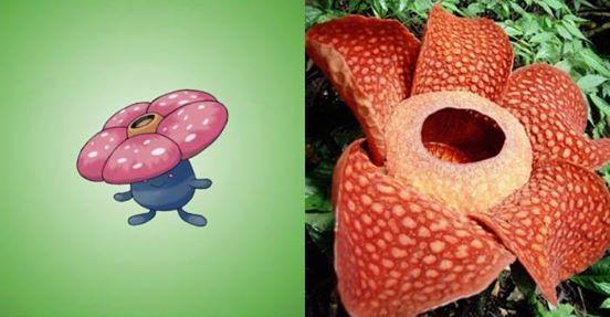 Nguyên mẫu đời thực của các Pokémon đình đám - Ảnh 14.