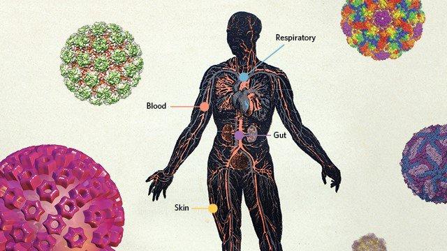 Đâu chỉ gây bệnh, có hàng trăm nghìn tỷ virus đang sống thiện lành trong cơ thể chúng ta - Ảnh 1.