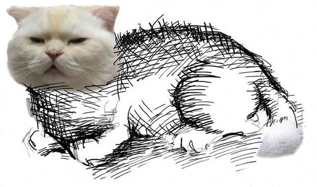 Ai đó yêu cầu vẽ một con mèo theo mẫu và cư dân mạng được dịp chơi tới bến cùng sự sáng tạo - Ảnh 17.