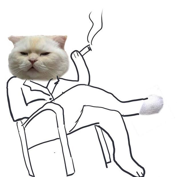 Ai đó yêu cầu vẽ một con mèo theo mẫu và cư dân mạng được dịp chơi tới bến cùng sự sáng tạo - Ảnh 5.