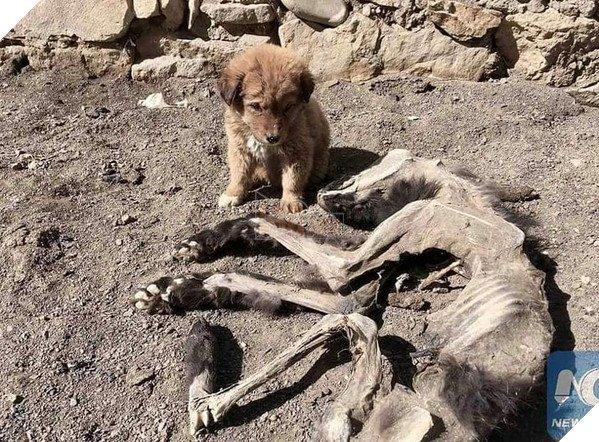 Chú chó nhỏ bẽn lẽn nép mình bên xác khô của mẹ khiến cư dân mạng xúc động về tình mẫu tử - Ảnh 1.