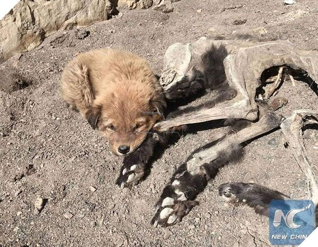 Chú chó nhỏ bẽn lẽn nép mình bên xác khô của mẹ khiến cư dân mạng xúc động về tình mẫu tử - Ảnh 2.