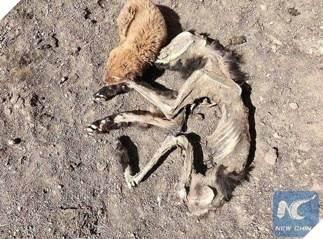 Chú chó nhỏ bẽn lẽn nép mình bên xác khô của mẹ khiến cư dân mạng xúc động về tình mẫu tử - Ảnh 3.