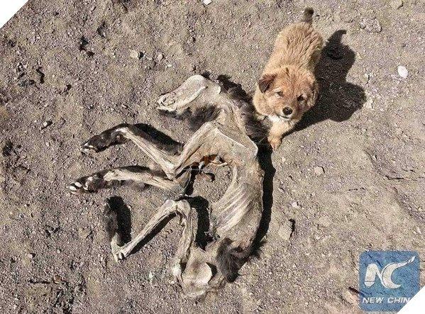 Chú chó nhỏ bẽn lẽn nép mình bên xác khô của mẹ khiến cư dân mạng xúc động về tình mẫu tử - Ảnh 4.