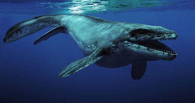 Top 10 sinh vật siêu khổng lồ thời tiền sử dễ bị nhầm thành khủng long - Ảnh 10.