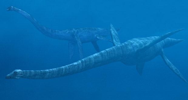 Top 10 sinh vật siêu khổng lồ thời tiền sử dễ bị nhầm thành khủng long - Ảnh 4.