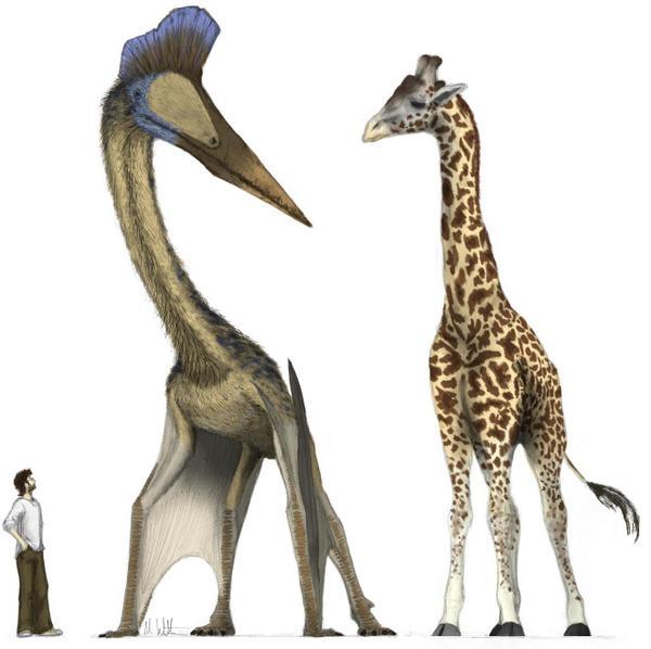 Top 10 sinh vật siêu khổng lồ thời tiền sử dễ bị nhầm thành khủng long - Ảnh 5.