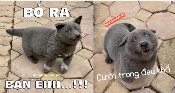 Điểm qua loạt thú cưng nổi tiếng và được chế ảnh meme khắp các diễn đàn mạng hiện nay 24-15836690133281293448387
