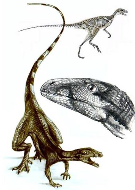 Top 5 điều kỳ thú về khủng long, điều cuối sẽ khiến bạn bất ngờ đấy - Ảnh 6.