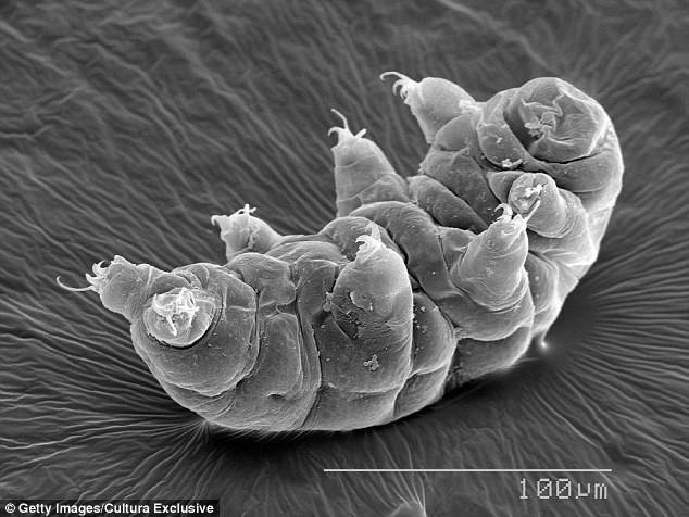Có thể bạn chưa biết: Đây là sinh vật chày cối sống dai nhất hành tinh - Ảnh 2.