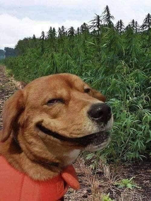 Giả chết để troll chủ rồi sau đó lại quay ra nhìn khinh bỉ, chú chó nhỏ khiến cộng đồng mạng thán phục vì độ hài hước vô cực - Ảnh 3.
