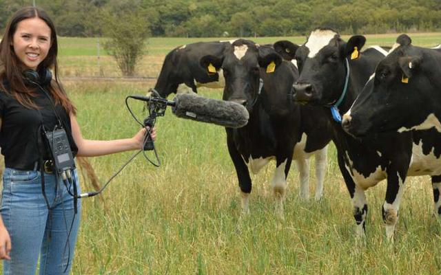 Đàn bò dẫm phải cáp quang, Internet gặp sự cố - Ảnh 2.