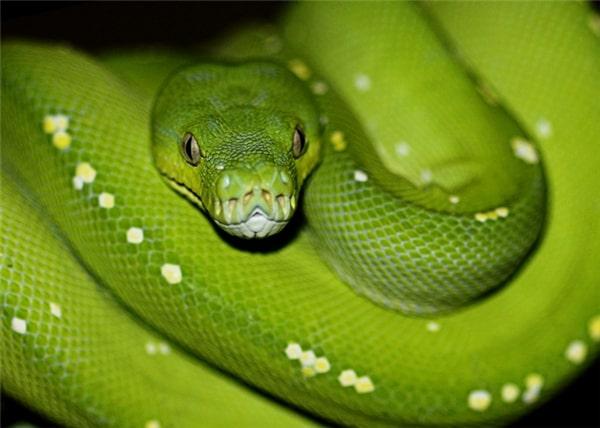 Top 5 sự thật mà chúng ta thường xuyên hiểu nhầm về rắn - Ảnh 5.