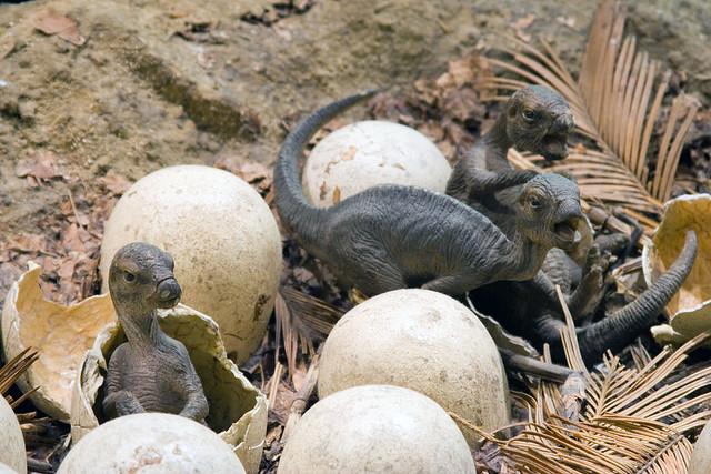 Top 10 điều có thể bạn chưa biết về khủng long, bạn đã biết được bao nhiêu? (P.2) - Ảnh 5.