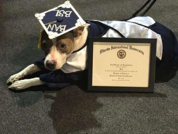 Đi học đều hơn cả chủ, chú chó bất ngờ được trao bằng cử nhân khiến cộng đồng mạng kinh ngạc - Ảnh 4.