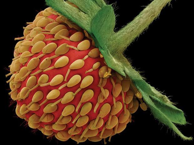 Chùm ảnh kinh dị khi nhìn qua kính hiển vi khiến người gan dạ nhất cũng phải rùng mình sởn gai ốc - Ảnh 2.
