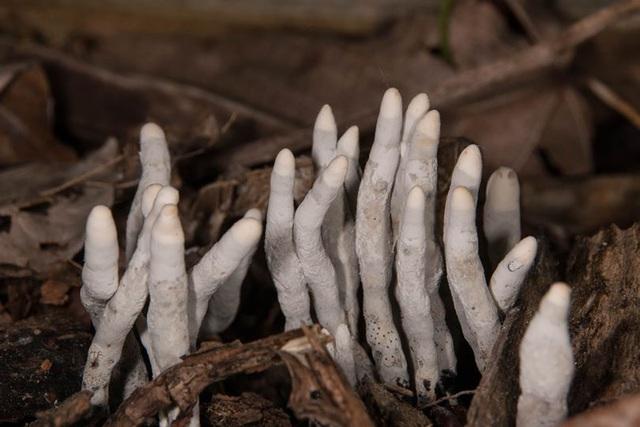 Những bàn chân xám ngoét tựa zombie trong rừng ở Ấn Độ: Sự thực về chúng là gì? - Ảnh 2.