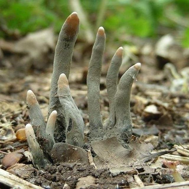 Những bàn chân xám ngoét tựa zombie trong rừng ở Ấn Độ: Sự thực về chúng là gì? - Ảnh 3.