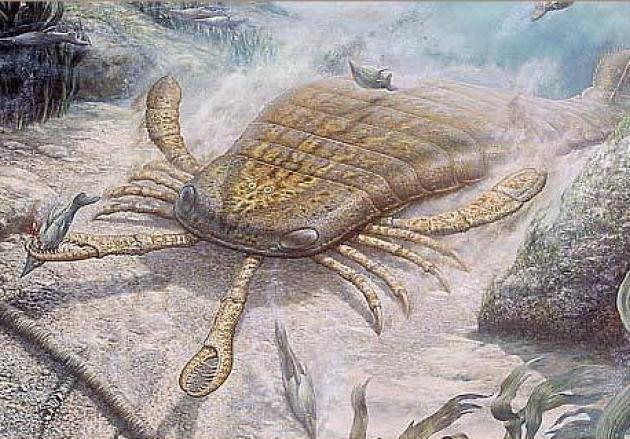 Những sinh vật siêu to khổng lồ từng tồn tại tồn tại trên Trái Đất từ trước tới nay - Ảnh 5.