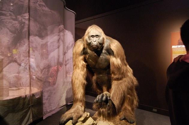 Những sinh vật siêu to khổng lồ từng tồn tại tồn tại trên Trái Đất từ trước tới nay - Ảnh 6.