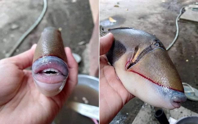 Cư dân mạng thích thú với con cá ''sở hữu bờ môi căng mọng'' y như con người