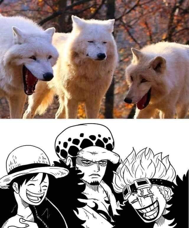 One Piece: Chết cười với loạt ảnh chế cực kỳ độc đáo tại arc Wano, nhìn ai cũng rất tấu hài - Ảnh 5.