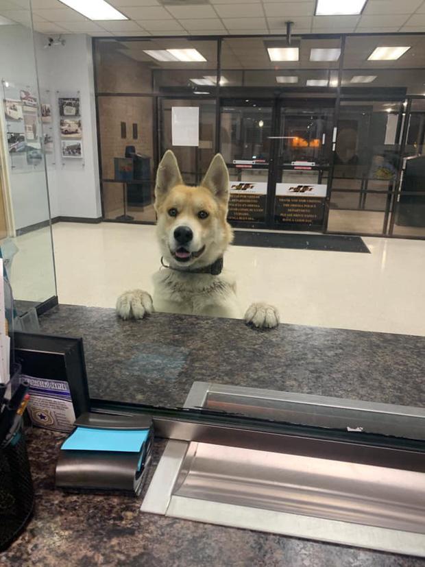 Mải chơi đi lạc, chú chó tự tìm đến đồn công an để báo cáo cháu đang bị mất tích ạ - Ảnh 1.