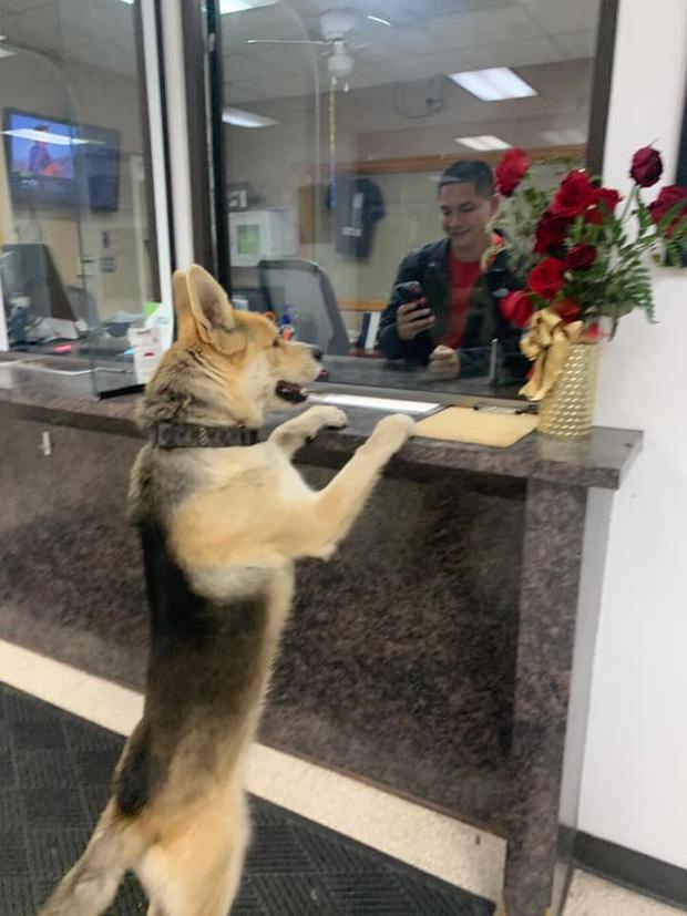 Mải chơi đi lạc, chú chó tự tìm đến đồn công an để báo cáo cháu đang bị mất tích ạ - Ảnh 2.