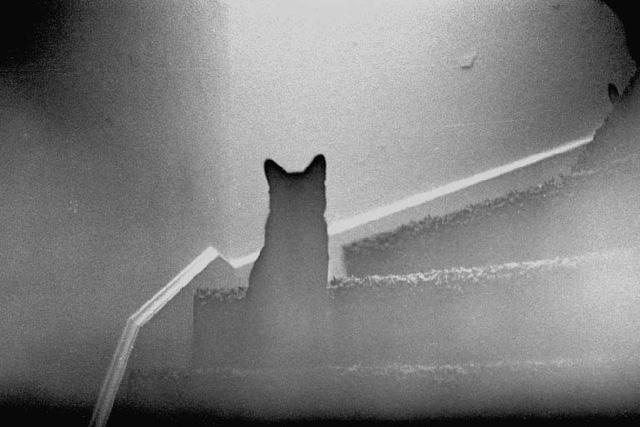 Những câu chuyện kinh dị: Hồn ma động vật quay về ám ảnh người sống - Ảnh 5.