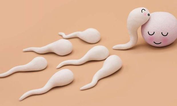 Chuyện chưa biết về tinh trùng: Cuộc đua kỳ lạ nhất thế giới, lúc gấp gáp, lúc nhẩn nha! - Ảnh 2.