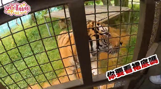 Đi sở thú làm vlog, cô nàng Youtuber bất ngờ bị vượn sàm sỡ ngay trên sóng - Ảnh 2.