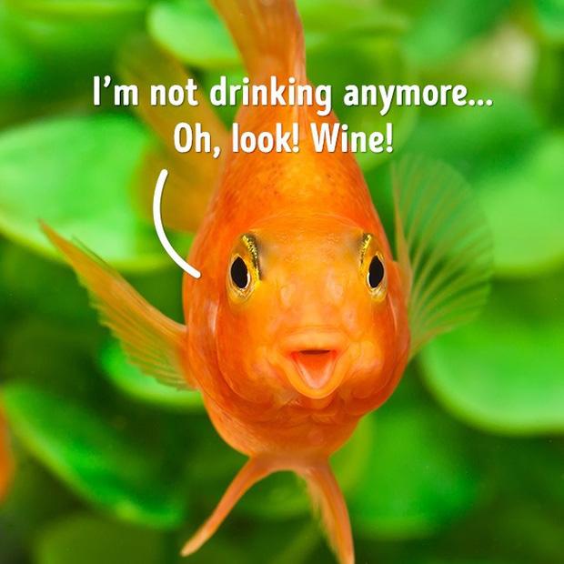 7 sự thật mà bạn chưa từng biết: Nước ngọt chai thủy tinh ngon hơn lon & chai nhựa? - Ảnh 7.