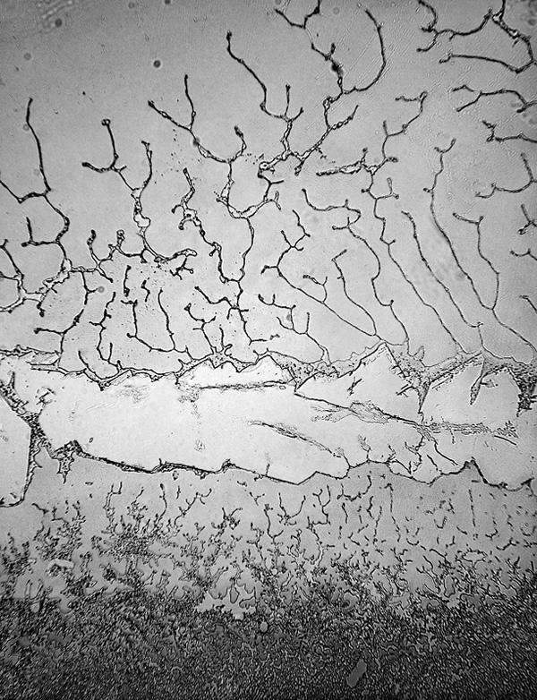 Những hình ảnh chưa từng thấy về nước mắt con người dưới kính hiển vi: Quái dị hơn cả chúng ta tưởng tượng - Ảnh 1.