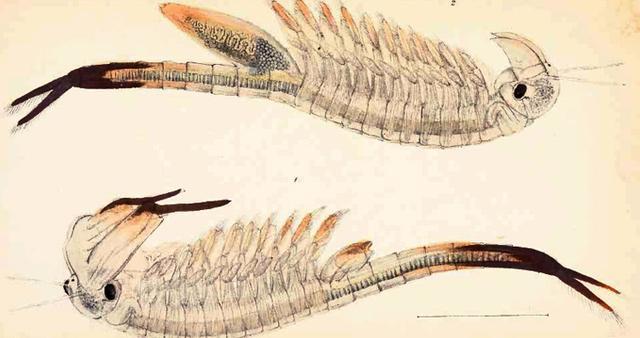 Những loài động vật tuyệt chủng vì sự thiếu hiểu biết của loài người - Ảnh 2.